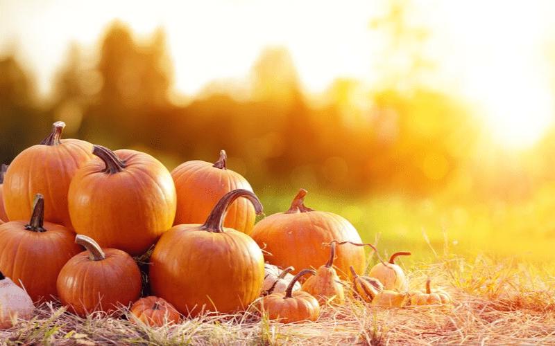 activités gratuites octobre