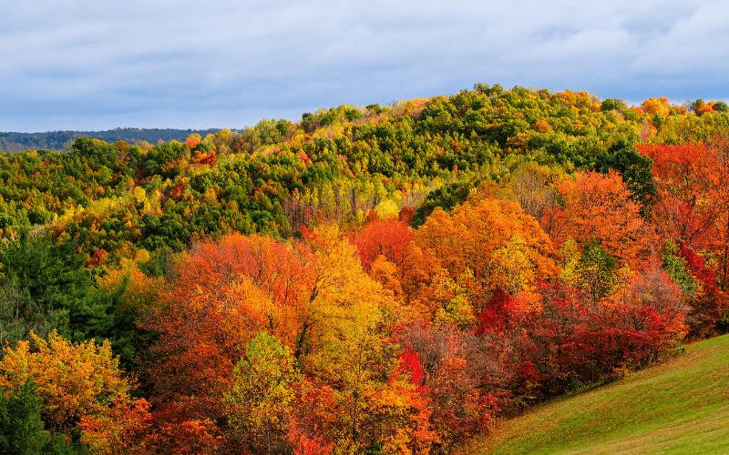 événements couleurs automne